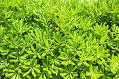 Modello delle foglie verdi Fotografie Stock