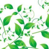 Modello delle foglie verdi Immagini Stock