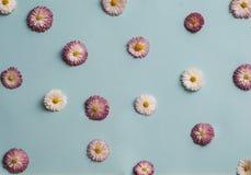 Modello delle margherite bianche e rosa Immagini Stock Libere da Diritti