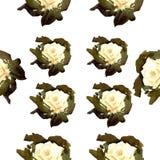 Modello delle rose bianche dell'acquerello Immagini Stock