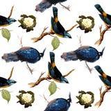 Modello delle rose e degli uccelli dell'acquerello Fotografie Stock Libere da Diritti