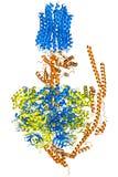 Modello dello synthase del trifosfato di adenosina Immagine Stock