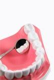 Modello dentale fotografia stock