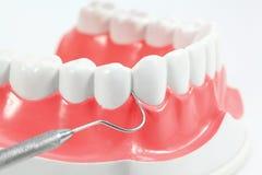 Modello dentale fotografia stock libera da diritti