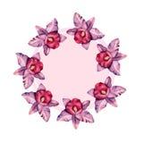 Modello desiged floreale del telaio con i fiori e le foglie dell'orchidea dell'acquerello illustrazione vettoriale