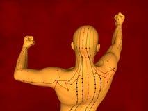 Modello di agopuntura, modello 3D Immagini Stock