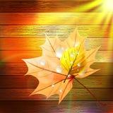 Modello di Autumn Leaf EPS10 più Fotografie Stock Libere da Diritti