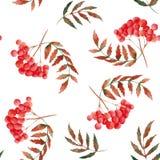 Modello di autunno dell'acquerello con la sorba, le foglie, i funghi, le mele, i coni, i fiori e le bacche illustrazione vettoriale