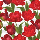 Modello di base di RGBSeamless del fondo rosso dei fiori del tulipano fotografia stock libera da diritti