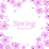 Modello di Cherry Blossom Frame Greeting Card Fotografia Stock Libera da Diritti
