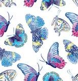 Modello di farfalla Fotografie Stock Libere da Diritti
