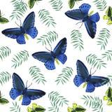 Modello di farfalle tropicale dell'acquerello Fotografie Stock Libere da Diritti