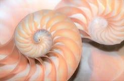 Modello di Fibonacci in conchiglia di nautilus di sezione trasversale fotografia stock libera da diritti