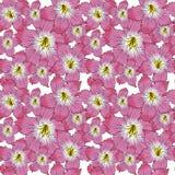 Modello di fiore Immagini Stock Libere da Diritti