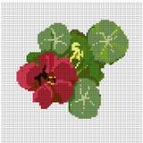Modello di fiore per il nasturzio del ricamo Fotografie Stock Libere da Diritti