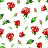 Modello di fiore rosa del Wildflower in uno stile dell'acquerello isolato Nome completo della pianta: rosa rossa, hulthemia, rosa Fotografia Stock Libera da Diritti