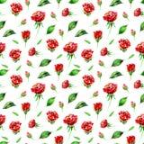 Modello di fiore rosa del Wildflower in uno stile dell'acquerello isolato Nome completo della pianta: rosa rossa, hulthemia, rosa Fotografie Stock