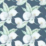 Modello di fiori bianco della calla dell'acquerello senza cuciture Fotografia Stock