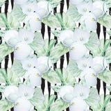 Modello di fiori bianco della calla dell'acquerello senza cuciture Fotografie Stock