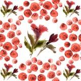 Modello di fiori dell'acquerello Fotografie Stock Libere da Diritti