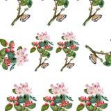 Modello di fiori della mela dell'acquerello Immagini Stock Libere da Diritti