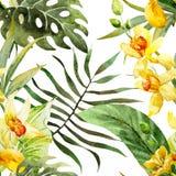 Modello di fiori di canna dell'acquerello Immagine Stock