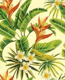 Modello di fiori esotico di plumeria tropicale Fotografie Stock
