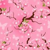 Modello di fiori senza cuciture del fiore di ciliegia Fotografie Stock