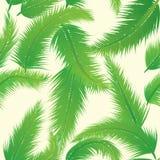 Modello di foglia di palma Fotografia Stock