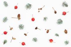 Modello di inverno delle ghiande, delle mele di paradiso e di attillato Immagini Stock