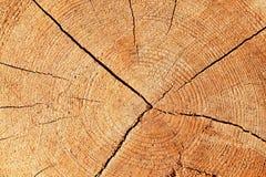 Modello di legno Immagini Stock