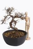 Modello di legno con l'albero immagini stock libere da diritti