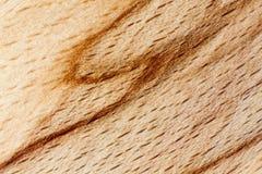 Modello di legno di faggio Fotografie Stock Libere da Diritti