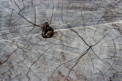Modello di legno incrinato asciutto di struttura del fondo Fotografia Stock Libera da Diritti