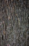 Modello di legno su un albero immagini stock libere da diritti