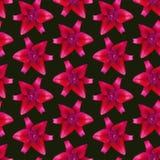 Modello di Lily Red senza cuciture Bella priorità bassa del fiore Fotografie Stock Libere da Diritti