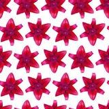 Modello di Lily Red senza cuciture Bella priorità bassa del fiore Immagini Stock