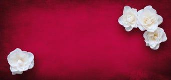 Modello di lusso per progettazione di carta con i fiori delle rose bianche fotografie stock