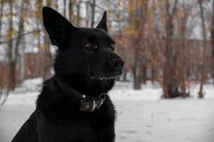 Modello di moda del cane Fotografia Stock