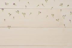 Modello di piccoli fiori del Ironweed Immagine Stock Libera da Diritti