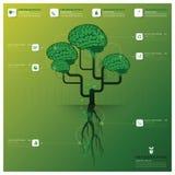 Modello di progettazione di Brain Tree And Root Infographic Immagini Stock