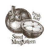 Modello di progettazione di logo del mangostano frutta fresca, alimento illustrazione di stock