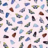 Modello di Rosa con la farfalla royalty illustrazione gratis