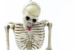 Modello di scheletro appeso su fondo bianco Fotografie Stock