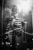 Modello di scheletro medico con luce in vetrina, stile in bianco e nero dell'immagine a colori Fotografie Stock