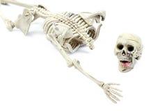 Modello di scheletro su fondo bianco Immagini Stock