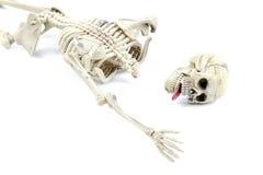Modello di scheletro su fondo bianco Fotografia Stock