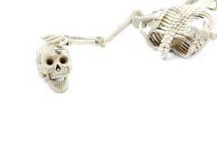 Modello di scheletro su fondo bianco Fotografia Stock Libera da Diritti
