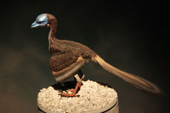 Modello di un uccello preistorico Immagine Stock Libera da Diritti