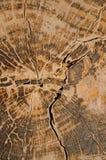 Modello di vecchio legno dall'Asia Immagine Stock Libera da Diritti